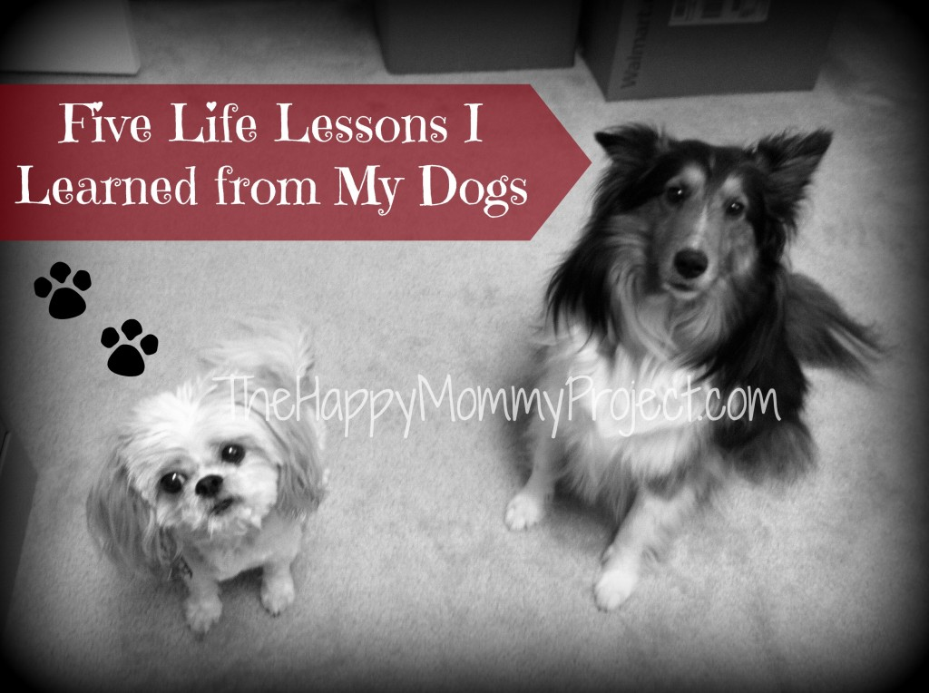 Lessons Dogs.jpg