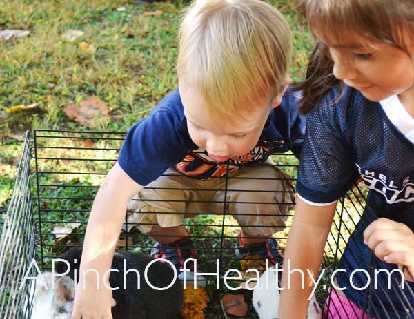 Fall-Harvest-Festival-bunnyFS2