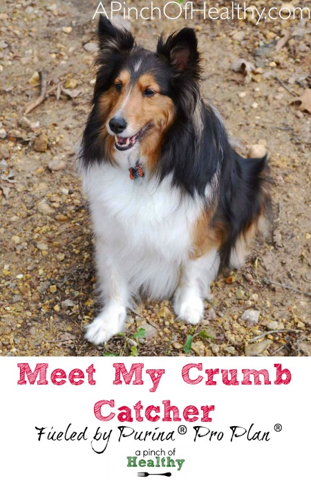 Meet My Crumb Catcher - fueled by Purina Pro Plan| APinchOfHealthy.com
